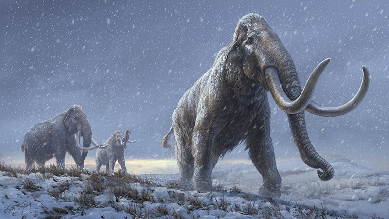An illustration of the steppe mammoths that preceded the woolly mammoth