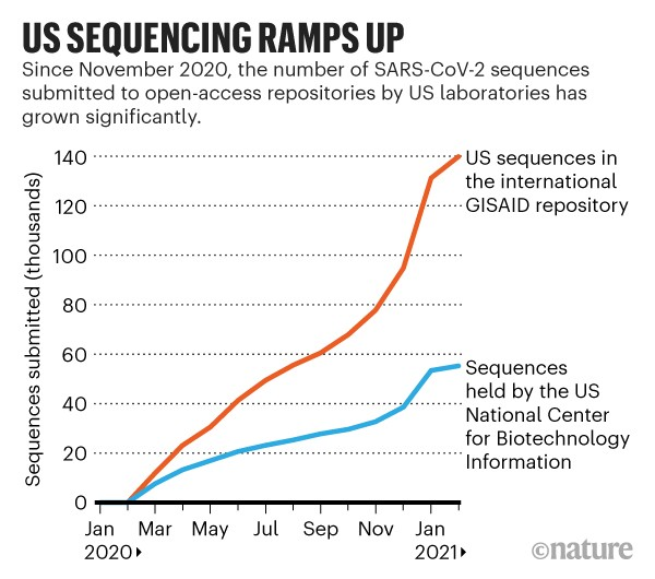 US sequencing ramps up: Line chart showing number of SARS-Cov-2 sequences submitted to open-access repositories.