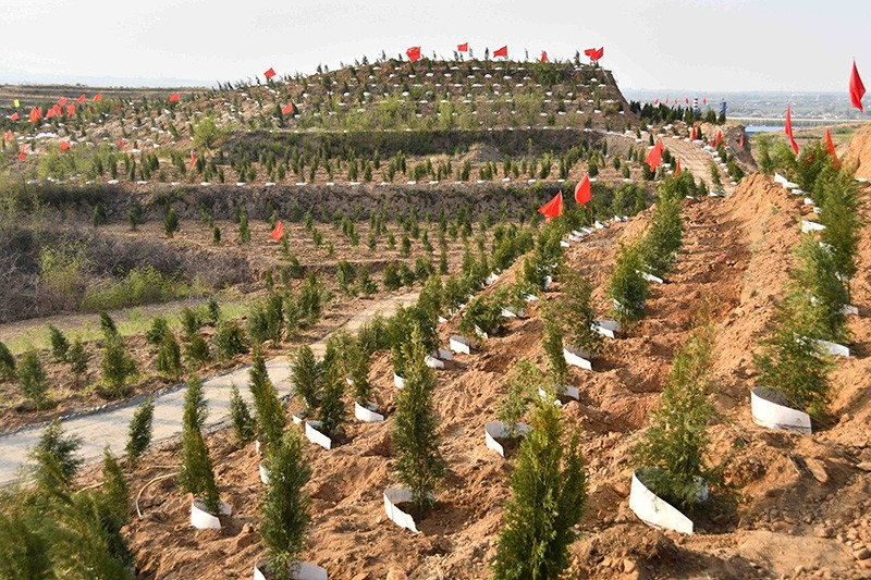 Trees are planted in Western barren mountains, Handan City, China