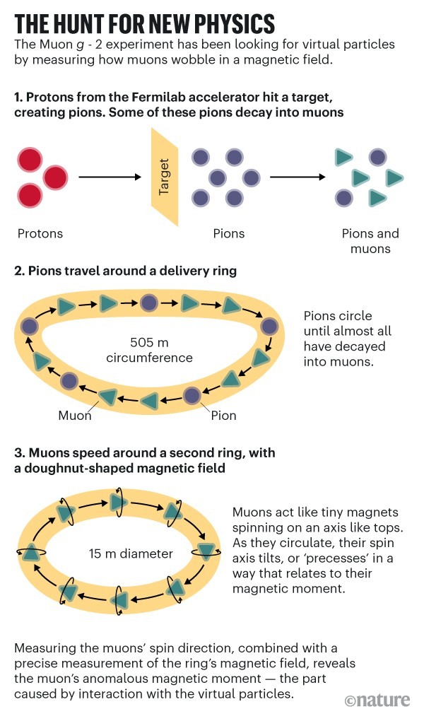 The hunt for new physics: Showing how the Muon g-2 experiment has been looking for virtual particles by observing muons.