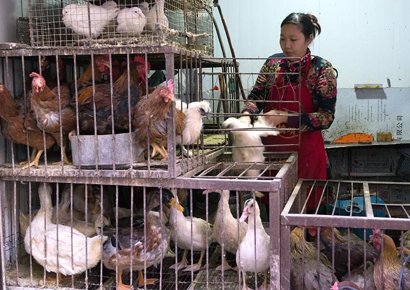 中国の蘭州の食品市場でケージで生きている鶏とアヒルを売る女性