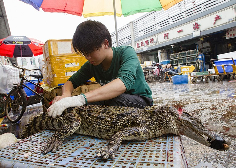 A man prepares a crocodile for sale by cutting it into parts at a seafood market in Guangzhou, China
