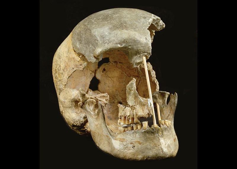 The skull of a modern human female individual from Zlatý kůň