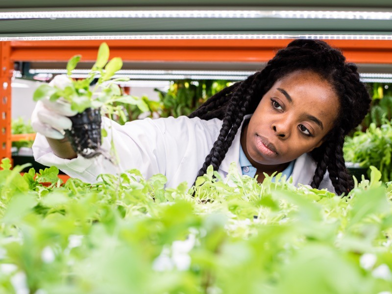Young African female biologist taking green seedling from shelf in greenhouse.