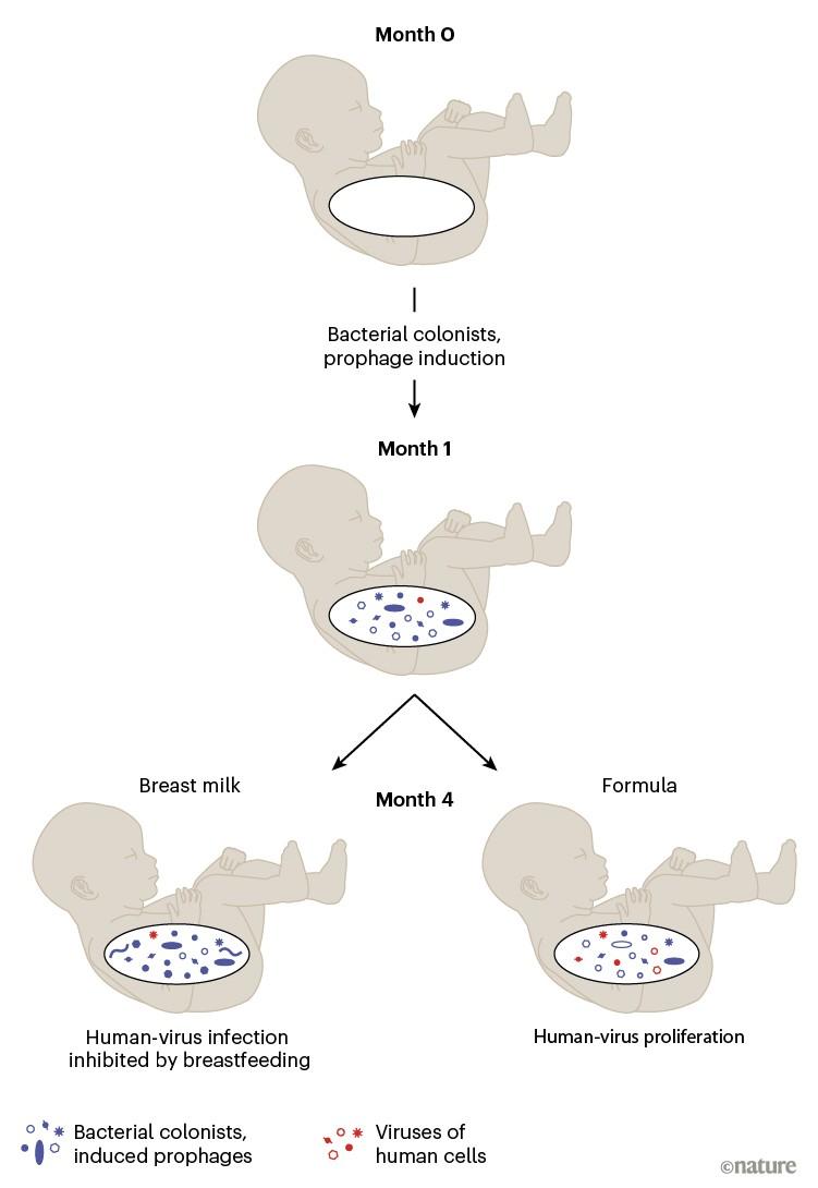 Hpv alternative cure, Humavirus natural cure - Prostatita papilloma, Hpv alternative cure