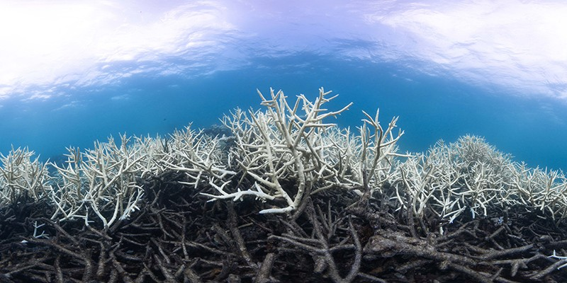 Coral bleaching on the Great Barrier Reef, 2017
