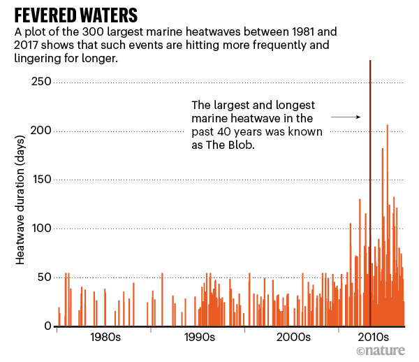 Fevered waters. A chart showing how marine heatwaves became longer and more frequent in the past 40 years.