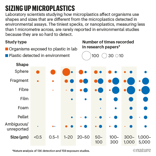 SIZING UP MICROPLASTICS: Infographic comparing the shape and size of microplastic found in the environment with lab studies