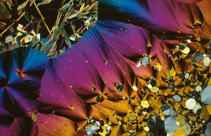Polarized light micrograph of serotonin.
