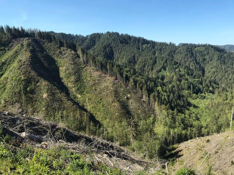 Arka planda orta yaşlı Douglas köknarı ve karışık orman bulunan dik, yakın zamanda kesilmiş bir yamaç.