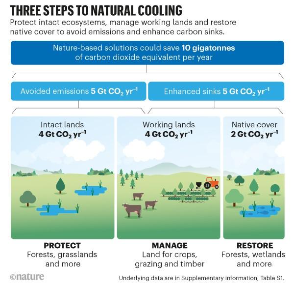 Doğal soğutmaya giden üç adım.  Karbon tasarrufu için doğa temelli çözümleri gösteren çizim akış şeması.