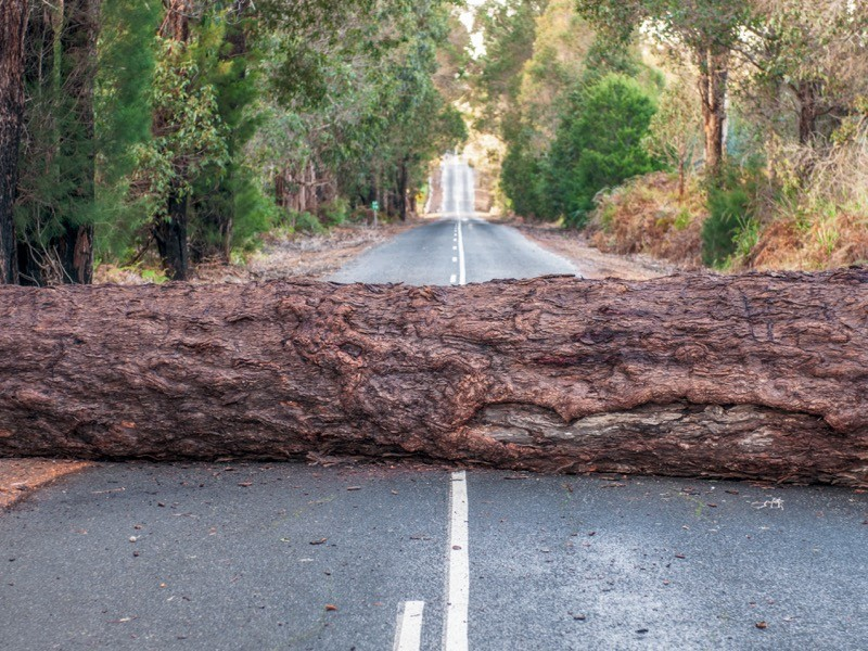 A large tree trunk, fallen during a storm, blocking a country road.