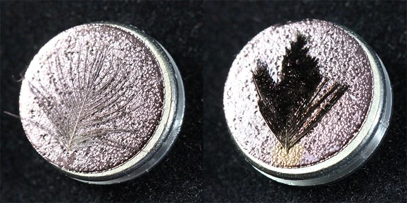 Soldaki resim bir Melampitta lugubris'in tüyünü göstermektedir.  Sağdaki resim Ptiloris cennetus'un tüyünü göstermektedir.