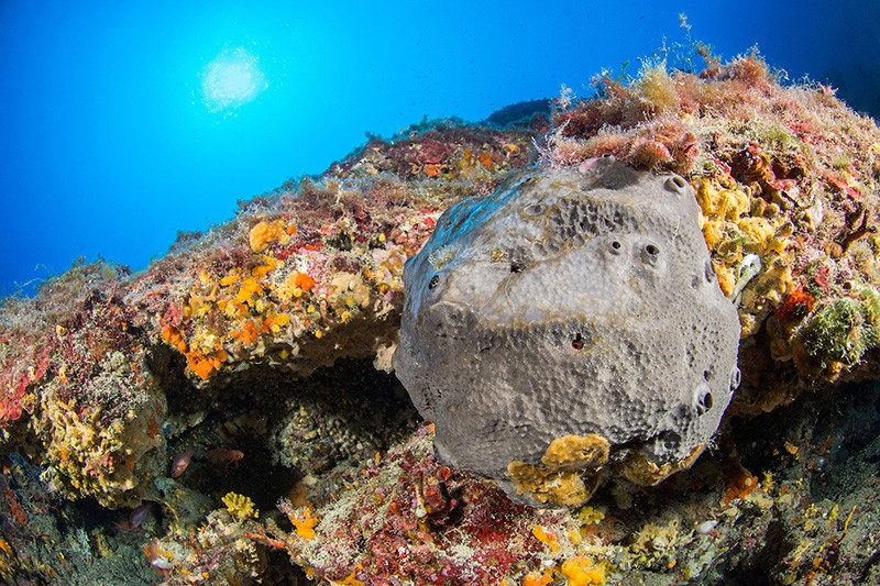 Black horny sponge among rocks covered in multicoloured organisms, and blue water.