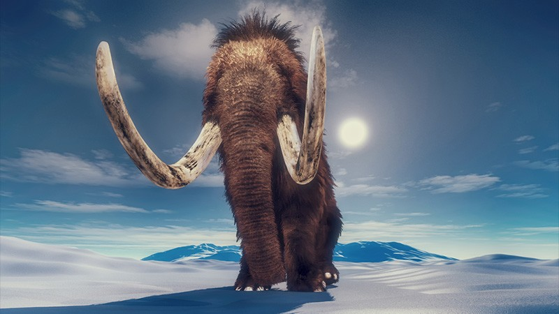 Mammoth's epic travels preserved in tusk