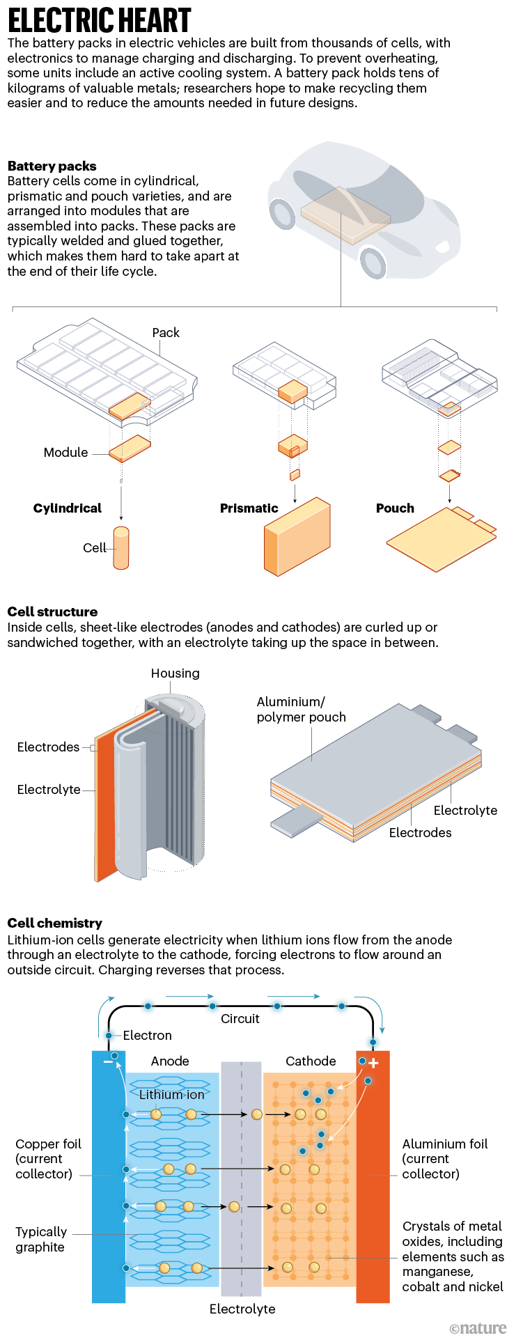 Electric heart: an infographic that shows how battery packs for electric vehicles are arranged, and how the cells operate.