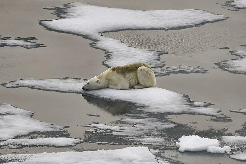 Um urso polar está em blocos de gelo no Canal Britânico, no arquipélago de Franz Josef Land, em 16 de agosto de 2021.