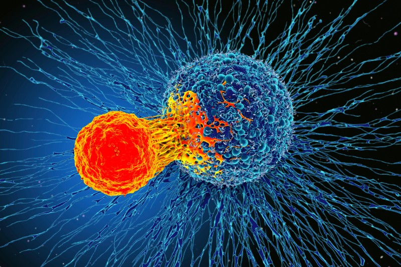 Decoding the signs of response to cancer immunotherapy