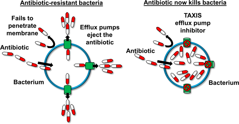 Tackling resistance in multidrug-resistant bacterial infections