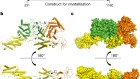 Structural basis of ubiquitin modification by the Legionella effector SdeA