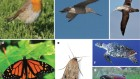 Long-distance navigation and magnetoreception in migratory animals