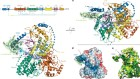 Structural basis of G-quadruplex unfolding by the DEAH/RHA helicase DHX36