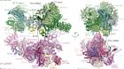 Prespliceosome structure provides insights into spliceosome assembly and regulation