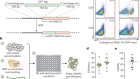 Reprogramming human T cell function and specificity with non-viral genome targeting