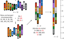 Karyotype engineering by chromosome fusion leads to reproductive isolation in yeast