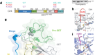 Automethylation-induced conformational switch in Clr4 (Suv39h) maintains epigenetic stability