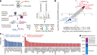 The NORAD lncRNA assembles a topoisomerase complex critical for genome stability