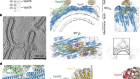Structure of the membrane-assembled retromer coat determined by cryo-electron tomography