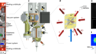 Space-borne Bose–Einstein condensation for precision interferometry