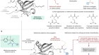A protein functionalization platform based on selective reactions at methionine residues