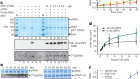 Transcription factor dimerization activates the p300 acetyltransferase