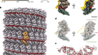 Cryo-EM structure of the Ebola virus nucleoprotein–RNA complex at 3.6 Å resolution