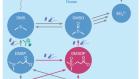 The metabolite dimethylsulfoxonium propionate extends the marine organosulfur cycle
