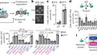 Distinct proteostasis circuits cooperate in nuclear and cytoplasmic protein quality control