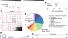 Improved reference genome of Aedes aegypti informs arbovirus vector control