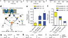 Mannose impairs tumour growth and enhances chemotherapy