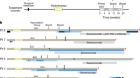 Neoantigen vaccine generates intratumoral T cell responses in phase Ib glioblastoma trial