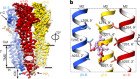 GABAA receptor signalling mechanisms revealed by structural pharmacology