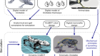 Reverse-engineering the locomotion of a stem amniote