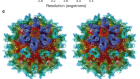Calicivirus VP2 forms a portal-like assembly following receptor engagement