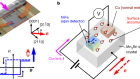 Magnetic and magnetic inverse spin Hall effects in a non-collinear antiferromagnet