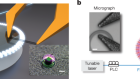 Real-time vibrations of a carbon nanotube