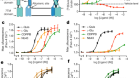 Structural insights into the activation of metabotropic glutamate receptors