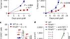 Anti-tumour immunity controlled through mRNA m6A methylation and YTHDF1 in dendritic cells