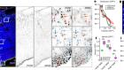 The centrosome protein AKNA regulates neurogenesis via microtubule organization