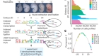 The single-cell transcriptional landscape of mammalian organogenesis
